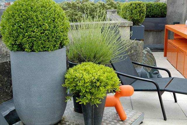 Menempatkan taman minimalis bertema taman air di bagian depan rumah