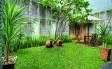 Gambar: Rumput Gajah Mini Untuk Taman Rumah Minimalis