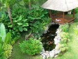 Gambar: Taman Rumah Yang Indah dan Sehat