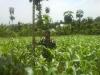 Tanah di daerah CIANJUR, harga Rp. 300.000.000,-