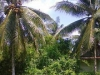 Tanah di daerah SINGKAWANG, harga Rp. 1.800.000.000,-