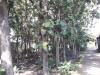 Tanah di daerah BANTUL, harga Rp. 2.500.000,-