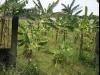Tanah di daerah DEPOK, harga Rp. 7.000.000.000,-