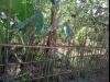 Tanah di daerah DEPOK, harga Rp. 315.000.000,-