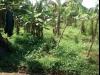 Tanah di daerah DEPOK, harga Rp. 150.000.000,-