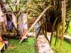 Tanah di daerah BOGOR, harga Rp. 375.000.000,-