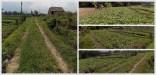 Tanah di daerah BATU, harga Rp. 500.000.000,-