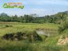 Tanah di daerah CIANJUR, harga Rp. 135.000.000,-