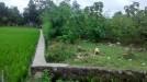 Tanah di daerah BANTUL, harga Rp. 800.000,-