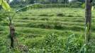 Tanah di daerah SLEMAN, harga Rp. 685.150.000,-