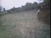 Tanah di daerah SUBANG, harga Rp. 750.000,-
