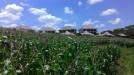 Tanah di daerah TABANAN, harga Rp. 1.000.000,-