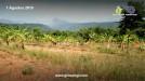 Tanah di daerah BOGOR, harga Rp. 35.000.000,-