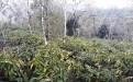 Tanah di daerah BULELENG, harga Rp. 3.700.000.000,-