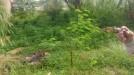 Tanah di daerah BEKASI, harga Rp. 300.000.000,-