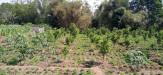 Tanah di daerah BATU, harga Rp. 1.300.000,-