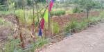 Tanah di daerah BATU, harga Rp. 85.000.000,-