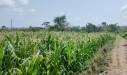 Tanah di daerah BANGKALAN, harga Rp. 1.900.455,-