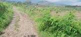 Tanah di daerah BATU, harga Rp. 600.000,-