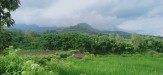 Tanah di daerah MALANG, harga Rp. 250.000,-