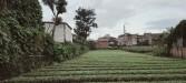 Tanah di daerah MALANG, harga Rp. 4.400.000.000,-