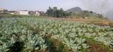 Tanah di daerah BATU, harga Rp. 800.000,-
