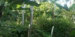 Tanah di daerah MALANG, harga Rp. 1.200.000.000,-
