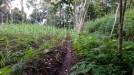 Tanah di daerah MALANG, harga Rp. 475.000.225,-