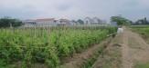 Rumah di daerah MALANG, harga Rp. 1.700.000,-