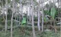 Tanah di daerah MALANG, harga Rp. 280.000,-