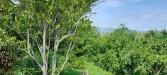 Tanah di daerah BATU, harga Rp. 1.200.025,-