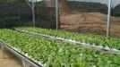 Tanah di daerah CIANJUR, harga Rp. 97.000.000,-