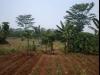 Tanah di daerah DEPOK, harga Rp. 4.500.000.000,-