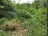Tanah di daerah DEPOK, harga Rp. 1.600.000,-