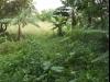 Tanah di daerah DEPOK, harga Rp. 3.000.000,-