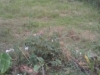 Tanah di daerah DEPOK, harga Rp. 780.000.000,-