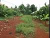 Tanah di daerah DEPOK, harga Rp. 1.700.000,-