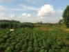 Tanah di daerah BOGOR, harga Rp. 600.000,-