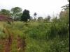 Tanah di daerah BANDUNG, harga Rp. 650.000,-